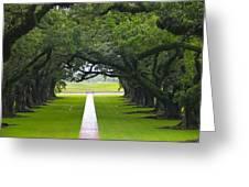 Trees At Oak Alley Plantation Greeting Card