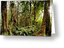 Trees At Olympic National Forest Greeting Card