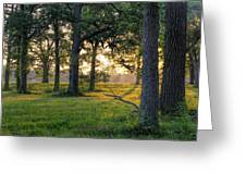 Trees At Sunrise Greeting Card