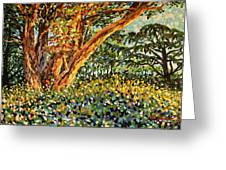 Trees At Sunset In Lafayette Park Greeting Card