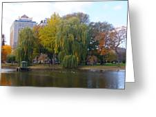 Trees At The Boston Public Garden Greeting Card