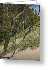 Trees At The Edge Of A Dune At Silver Lake Greeting Card