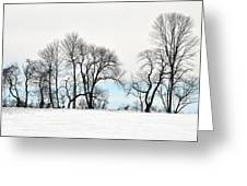 Trees At Tyler Park Greeting Card