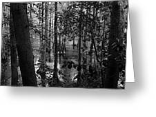 Trees Bw Greeting Card