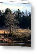 Trees By The Wayside Greeting Card