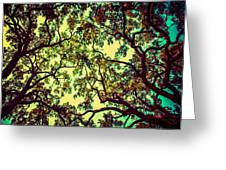 Trees Closing In Greeting Card