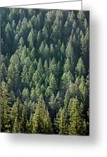 1a9502-trees Lit Up, Wy Greeting Card