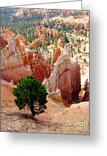 Tree's Eye View Greeting Card