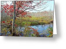 Trees In A Forest, Damariscotta Greeting Card