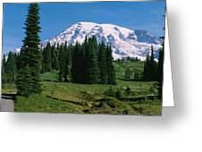 Trees In A Forest, Mt Rainier National Greeting Card