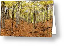 Trees In A Forest, Stephen A. Forbes Greeting Card