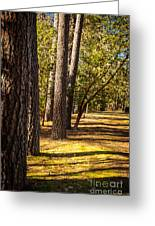 Trees In A Park Greeting Card