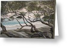 Trees In Costa Rica Greeting Card
