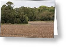 Trees In Field Greeting Card
