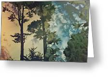 Trees In Golden Gate Park Greeting Card