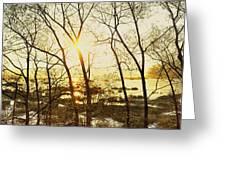Trees In Marsh, Maine, Usa Greeting Card