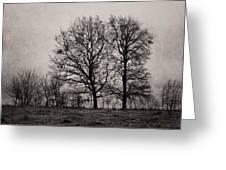 Trees In November Greeting Card