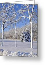 Trees In Snow  Wisconsin Greeting Card by Anonymous