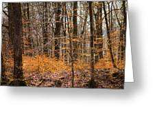 Trees In The Forest In March With Orange Leaves Greeting Card