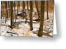 Trees In The Forest In Winter Brown And Orange Leaves Greeting Card