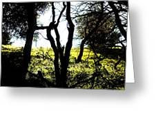 Trees In The Forest Greeting Card