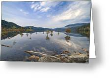 Trees In The Lake Greeting Card
