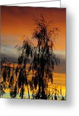 Trees In The Sunset Greeting Card