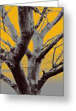 Winter Trees In Yellow Gray Mist 1 Greeting Card