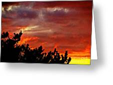 Trees Knowing The Sky Greeting Card by Q's House of Art ArtandFinePhotography