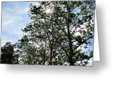 Trees At The Park Greeting Card