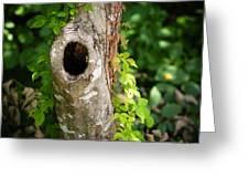 Tree's Mandala Greeting Card