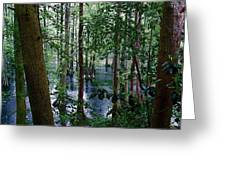 Trees Greeting Card by Nelson Watkins