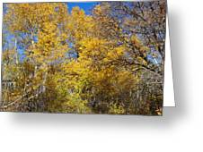 Trees Of Color Greeting Card