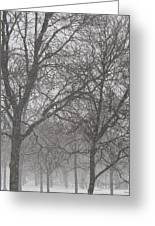 Trees Of Silence Greeting Card
