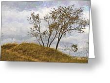 Trees Of The Beach Greeting Card