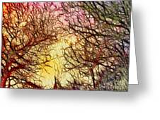 Trees Of The Four Seasons Greeting Card