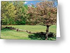 Trees On A Field, Davidson River Greeting Card