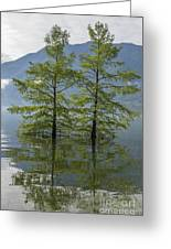 Trees On A Flooding Alpine Lake Greeting Card
