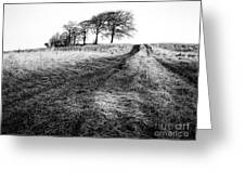 Trees On A Hill Greeting Card by John Farnan