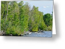 Trees On A Lakeshore Greeting Card