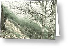 Trees On A Mountain Greeting Card