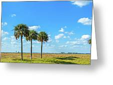 Trees On Landscape, Florida, Usa Greeting Card