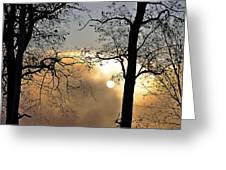 Trees On Misty Morning Greeting Card