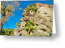 Trees On South Side Of Andreas Canyon In Indian Canyons-ca Greeting Card