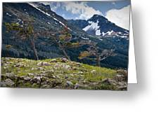 Trees On Top Of A Ridge At Glacier National Park Greeting Card