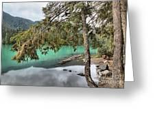 Trees Overhanging Cheakamus Lake Greeting Card