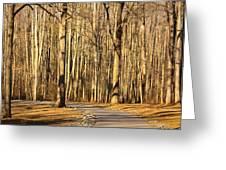 Trees Shadows Greeting Card