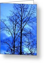 Trees So Tall In Winter Greeting Card
