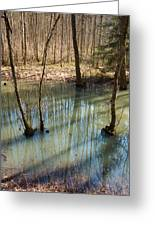 Trees Standing In The Water Greeting Card