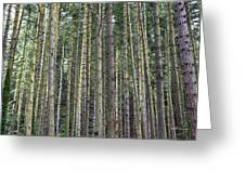 Trees Trees And More Trees Greeting Card